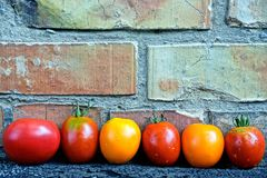 A row of ripe tomatoes lie on a brick wall Stock Photos