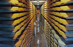 Row upon row of cheese left to mature in a cellar Royalty Free Stock Photo