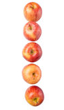 Row Of Royal Gala Apple IX Royalty Free Stock Images