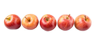 Row Of Royal Gala Apple VI Royalty Free Stock Image