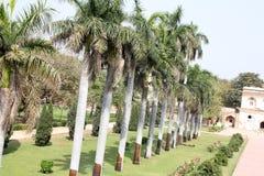 Row of Royal palms in garden of Safdarjung Tomb, New Delhi, India Stock Photo