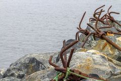 Row of rusty anchors, Newfoundland