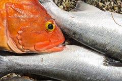 Row of salmon and rockfish on beach Stock Photo