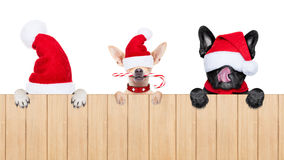 Row of santa claus dogs Royalty Free Stock Images