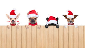 Row of santa claus dogs Stock Photos