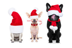 Row of santa claus dogs Stock Image
