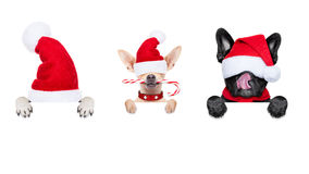 Row of santa claus dogs Stock Photography