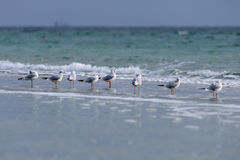 A row of seagulls sitting on the shore of the sea Stock Photo