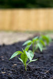 Row of Seedlings Stock Photos