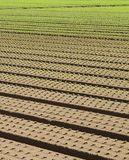 Row of seedlings growing in the agricultural field 2 Stock Photos