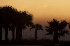 Row of Silhouetted Palm Trees. Silhouette of row of palm trees and tall grasses with orange sky as background Stock Images