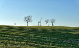 A row of silhouetted small trees. Royalty Free Stock Images