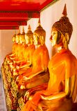 Row of Sitting Buddha statues in Wat Pho royalty free stock images