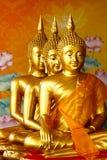 Row of sitting golden Buddha statutes Stock Images