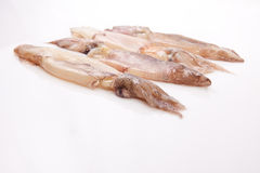 Row of small freshly squids Stock Photography