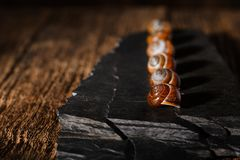 Row from snail shells on black stone Royalty Free Stock Photos