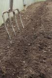 Row of sowed peas seeds in greenhouse Stock Photos