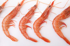 Row of spanish rice shrimps. Little white shrimps also called in Spain rice shrimps. They are usually cooked in rice recipes like Paella dish Stock Photos