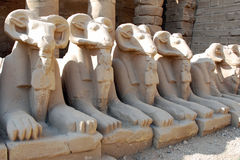 Row of sphinxes with rams heads-Temple of Karnak Stock Images