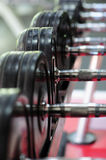 Row of spinlock dumbbels in special rack Royalty Free Stock Photos