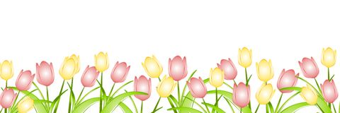 Row of Spring Tulips. A background border featuring a row of yellow and pink spring tulips as a page border royalty free illustration
