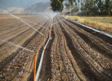 Row of sprinklers on open field Royalty Free Stock Images