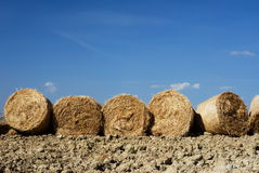 Row of straw bales Stock Photo