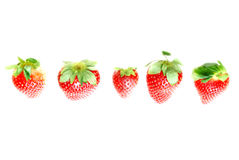 Row of strawberries Royalty Free Stock Images