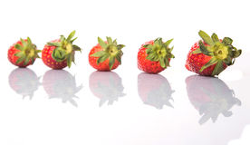 Row Of Strawberries Fruits IV Royalty Free Stock Image