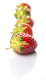 Row Of Strawberries Fruits VII Royalty Free Stock Photo