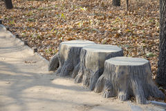 A row of stumps Royalty Free Stock Photo