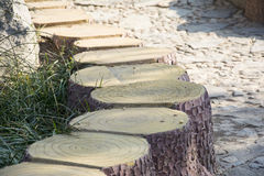 A row of stumps Stock Photography