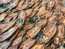 Row Sun-dried salted fish. Close up of row Sun-dried salted fish Royalty Free Stock Photos