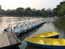 Row of Swan Boats Style and Two Rowboats in The Lake at Dusk Royalty Free Stock Photography