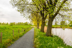 Row of tall trees with budding fresh young green leaves. Next to a lake and a fence in front of an embankment. It is a cloudy day in springtime royalty free stock images