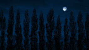 Row Of Tall Trees Sway At Night. Tall trees in a row at night with moon above stock footage