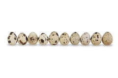 Row of Ten Quail Eggs Royalty Free Stock Photos