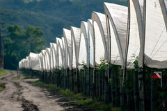 Row of Tents Royalty Free Stock Image
