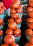 Row of tomato baskets Royalty Free Stock Image