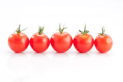 Row of Tomatoes Stock Photography