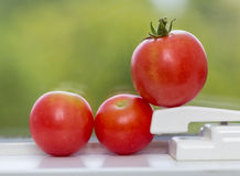 Row of tomatoes on window sill Stock Photo