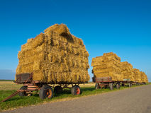 Row of Trailers with Hay Royalty Free Stock Images