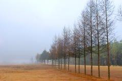 A  row of tree Royalty Free Stock Image