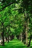 Row of tree royalty free stock photo