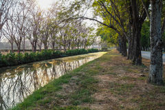 Row of tree along canal. Tree plantation in a row along the canal in the morning time Royalty Free Stock Images