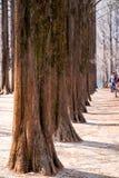 Row of tree Royalty Free Stock Photography