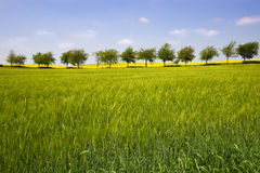 Row of trees. In Shropshire, England royalty free stock image