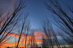 Row of trees. A row of trees during a beautiful sunset stock image
