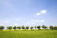 Row of trees. In Shropshire, England stock images