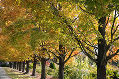 Row Of Trees. A Row Of Trees In Autumn Colors, Ault Park, Cincinnati, Ohio Royalty Free Stock Image